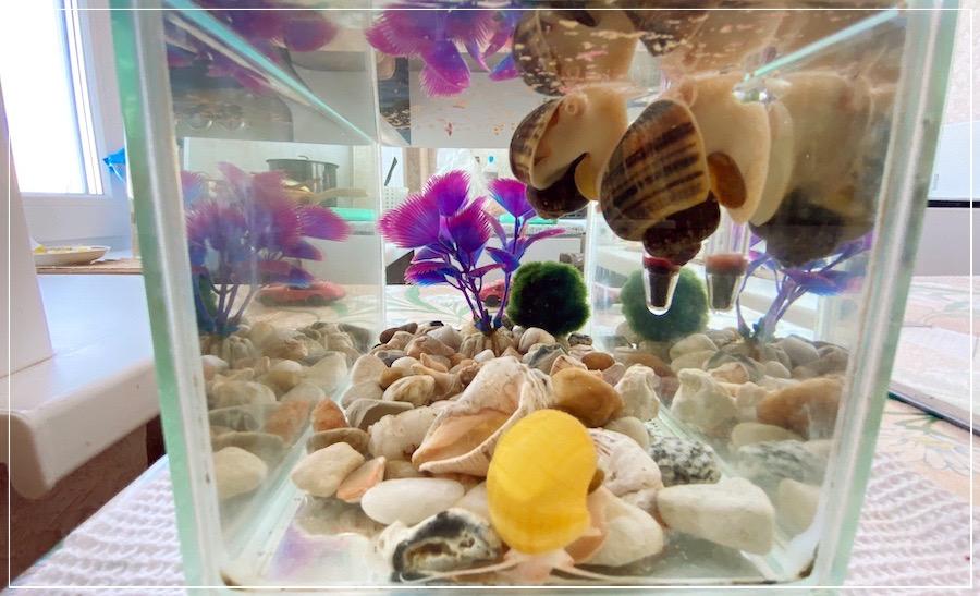 улитки ампулярии в аквариуме