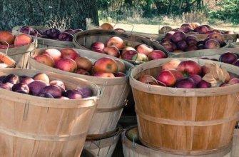 корзины с яблоками