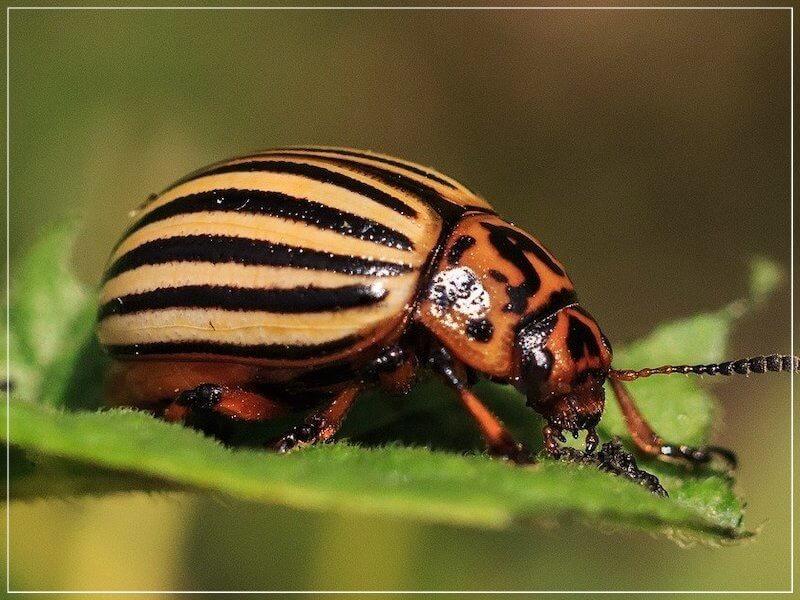 жук на листе растения